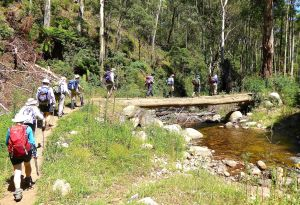 The trail was shared with mountain bikers so bridges were substantial.